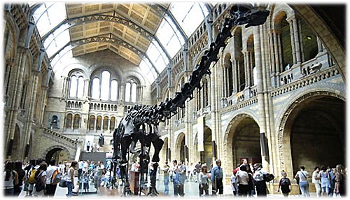 ����� ������������ ������� (Natural History Museum)